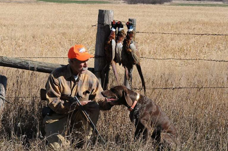 Tips for Training Bird Dogs